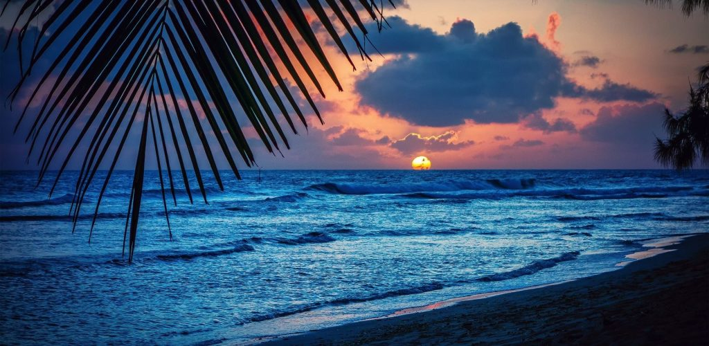 Beach Caribbean Silhouette Leaves Nature Palm Sunset Sea Barbados Trees Evening Sun Landscape Hd Wallpapers For Pc 1080p Free Download