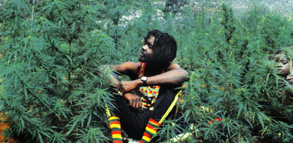 WESTMORELAND,  JAMAICA - 1975:  Reggae star Peter Tosh sits in a field of marijuana  in 1975 in Westmoreland, Jamaica.  (Photo by Lee Jaffe/Getty Images)